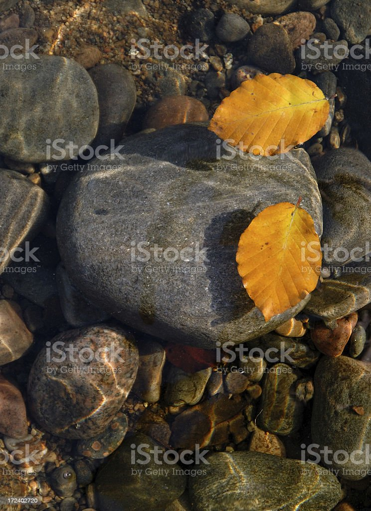 Leaves, Water and Stone royalty-free stock photo
