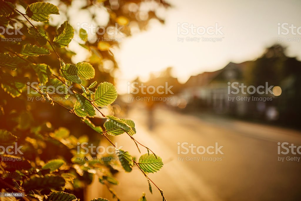 Leaves with blurred road in the back stock photo