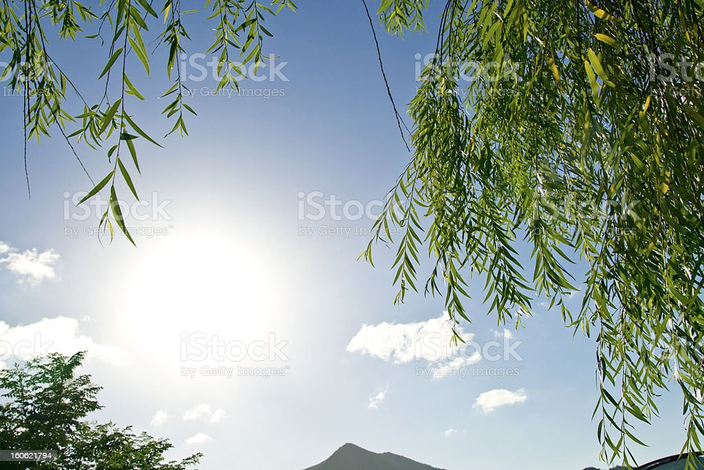 leaves with sun royalty-free stock photo