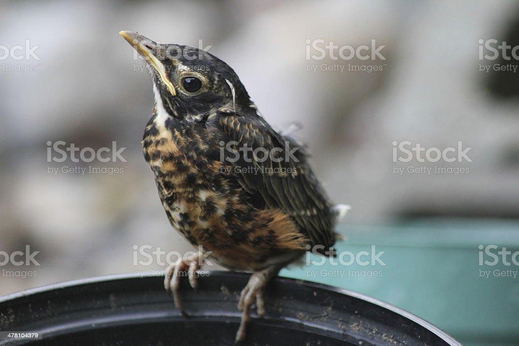 Leaving the Nest stock photo