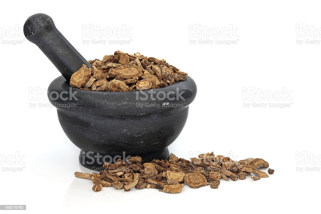 Ledebouriella Root royalty-free stock photo