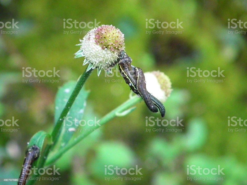 Leeches on flower stock photo