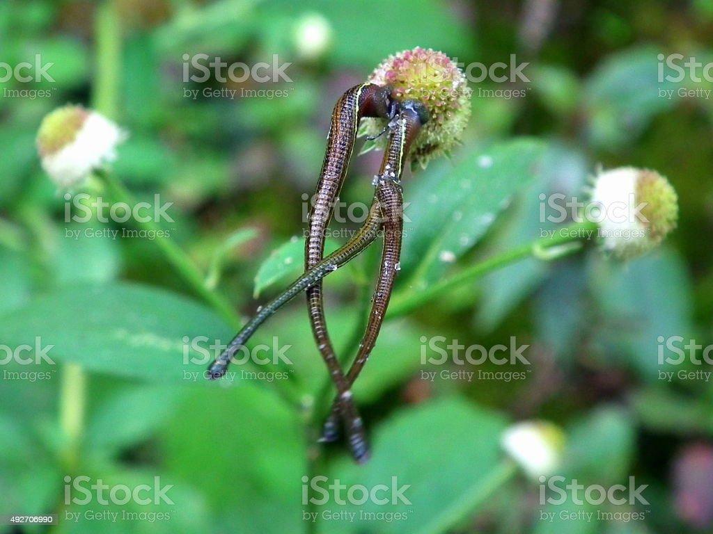 Leeches stock photo