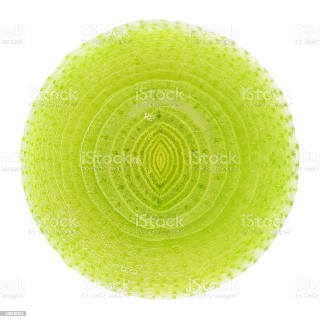 Leek cross section with clipping path isolated on white backgrou stock photo