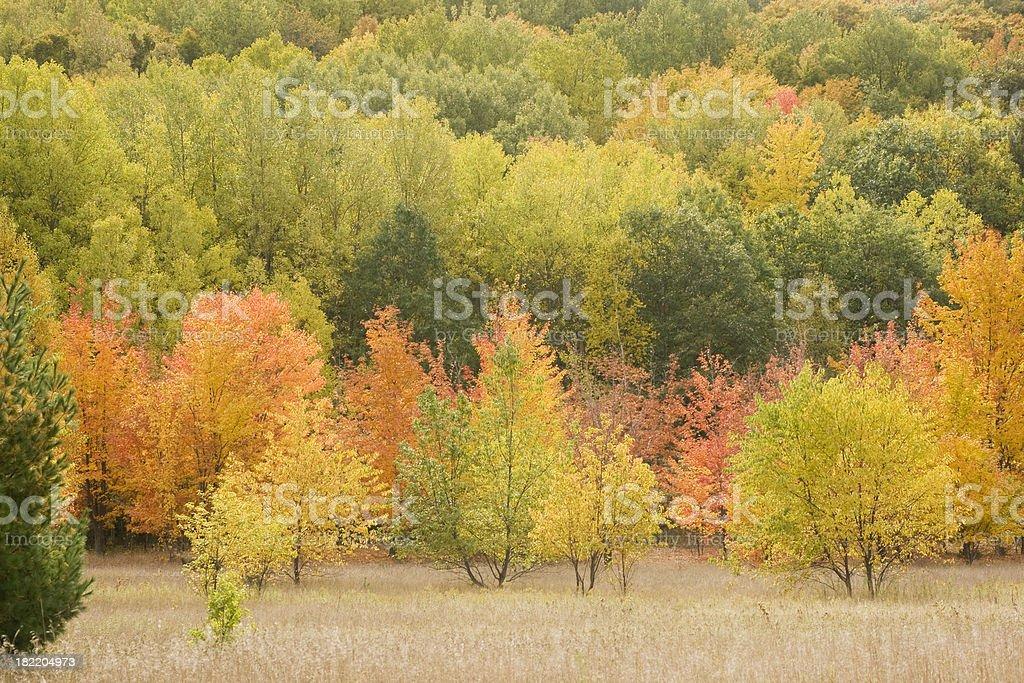 Leelanau Color stock photo