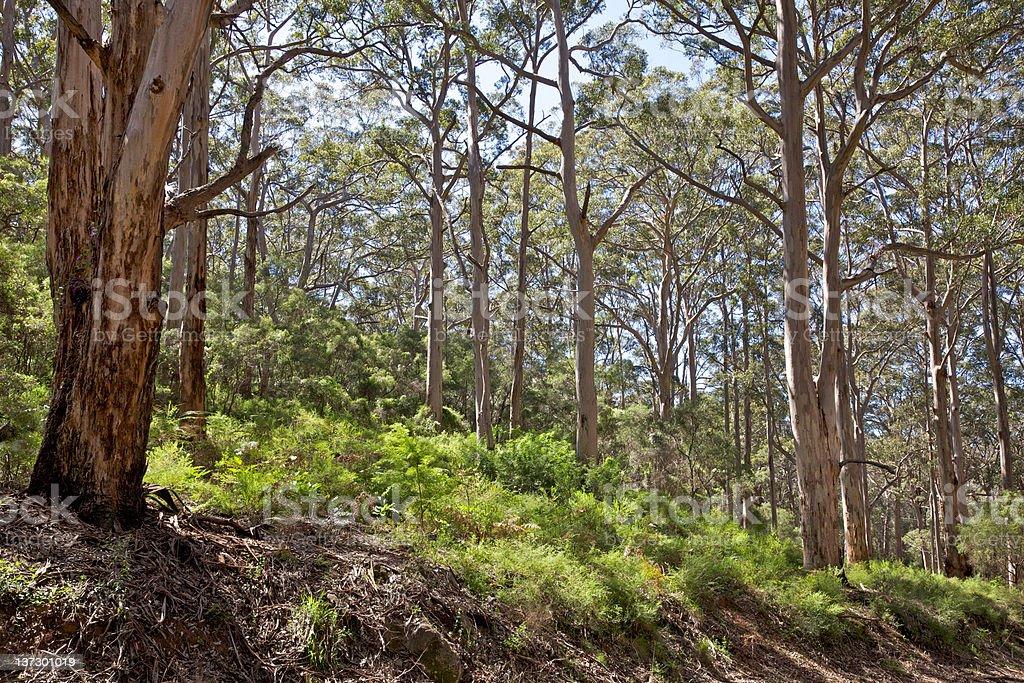 Leeuwin-Naturaliste National Park royalty-free stock photo