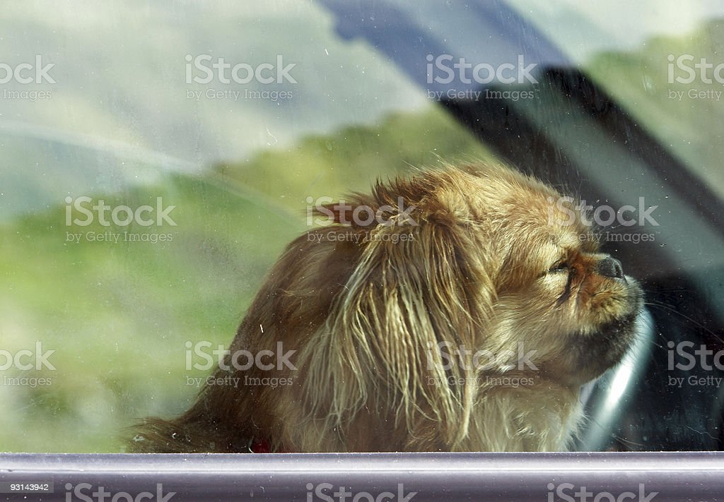 Left alone royalty-free stock photo