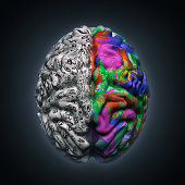 left and right sides of brain functions
