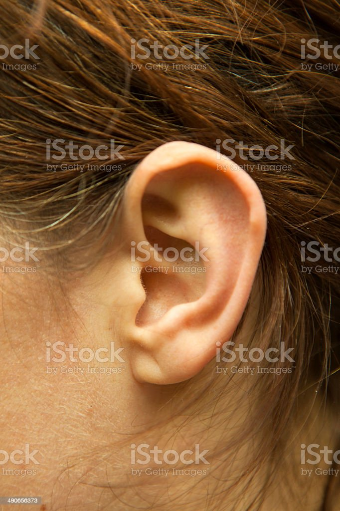 Left ear of  woman stock photo