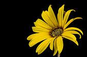 Left looking yellow flower