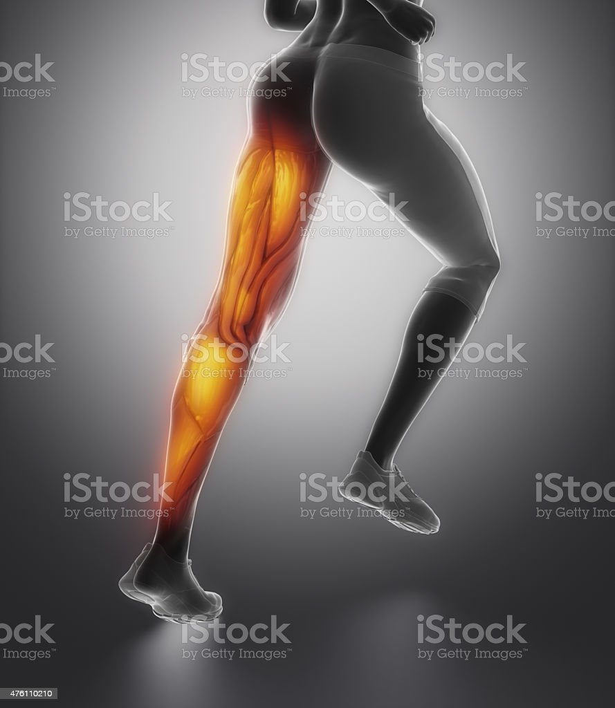LEg female muscle anatomy back view stock photo