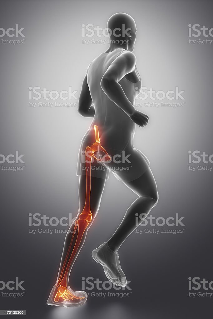 Leg joints anatomy stock photo