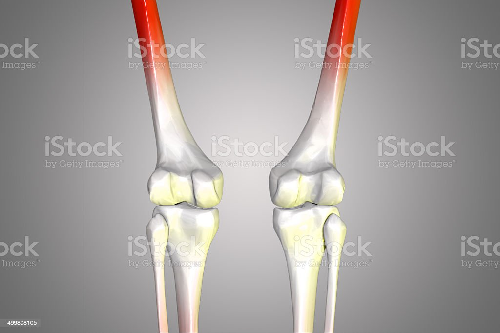 leg joints royalty-free stock photo