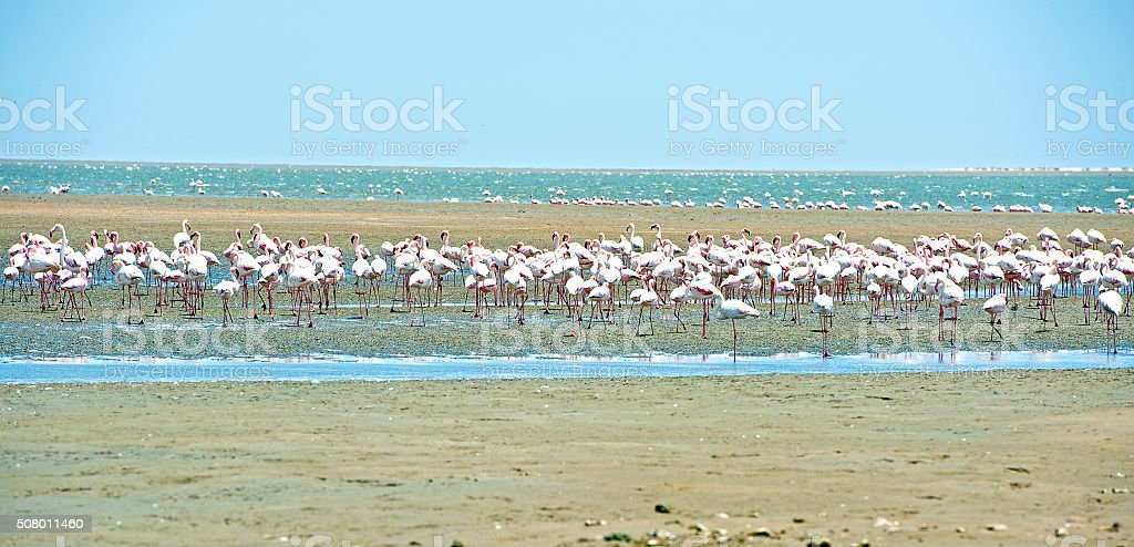 Leggy lagoon, Walvis Bay, Namibia, Africa stock photo