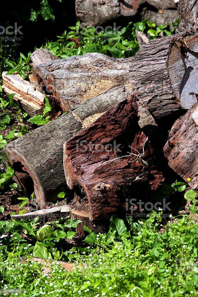 legno stock photo
