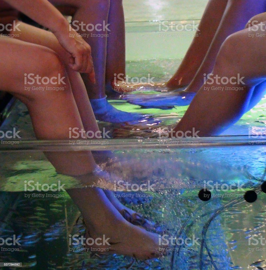Legs Having Fresh Water Fish Spa Skin Care Treatment stock photo