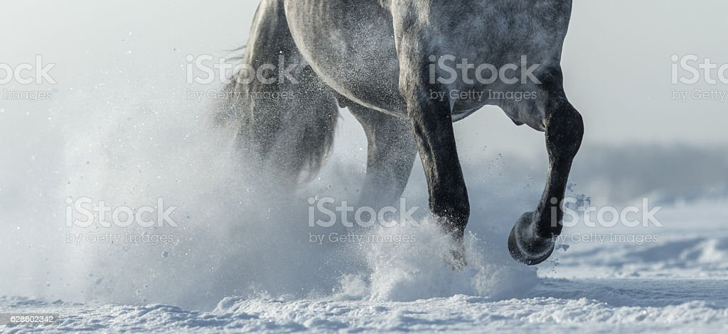 Legs of horse close up in snow stock photo