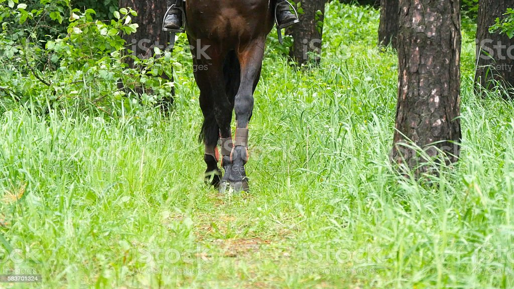 Legs of horse walk in green grass as it approaches stock photo