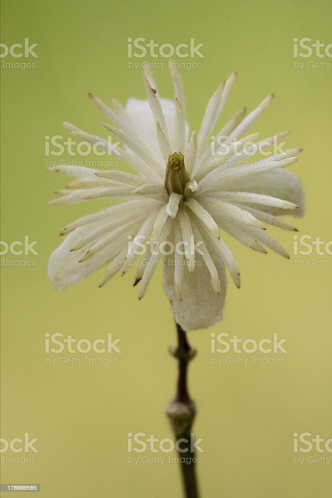 leguminose  in green background royalty-free stock photo