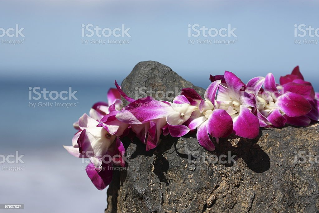Lei on volcanic rock in Maui stock photo