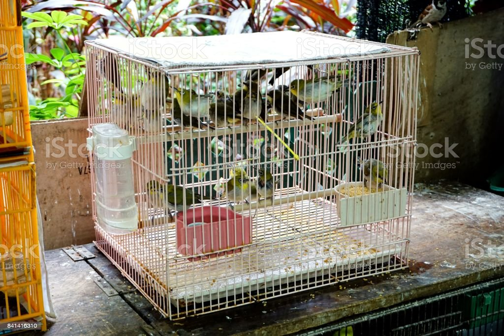 Leiothrix in Yuen Po Street Bird Garden, Hong Kong stock photo