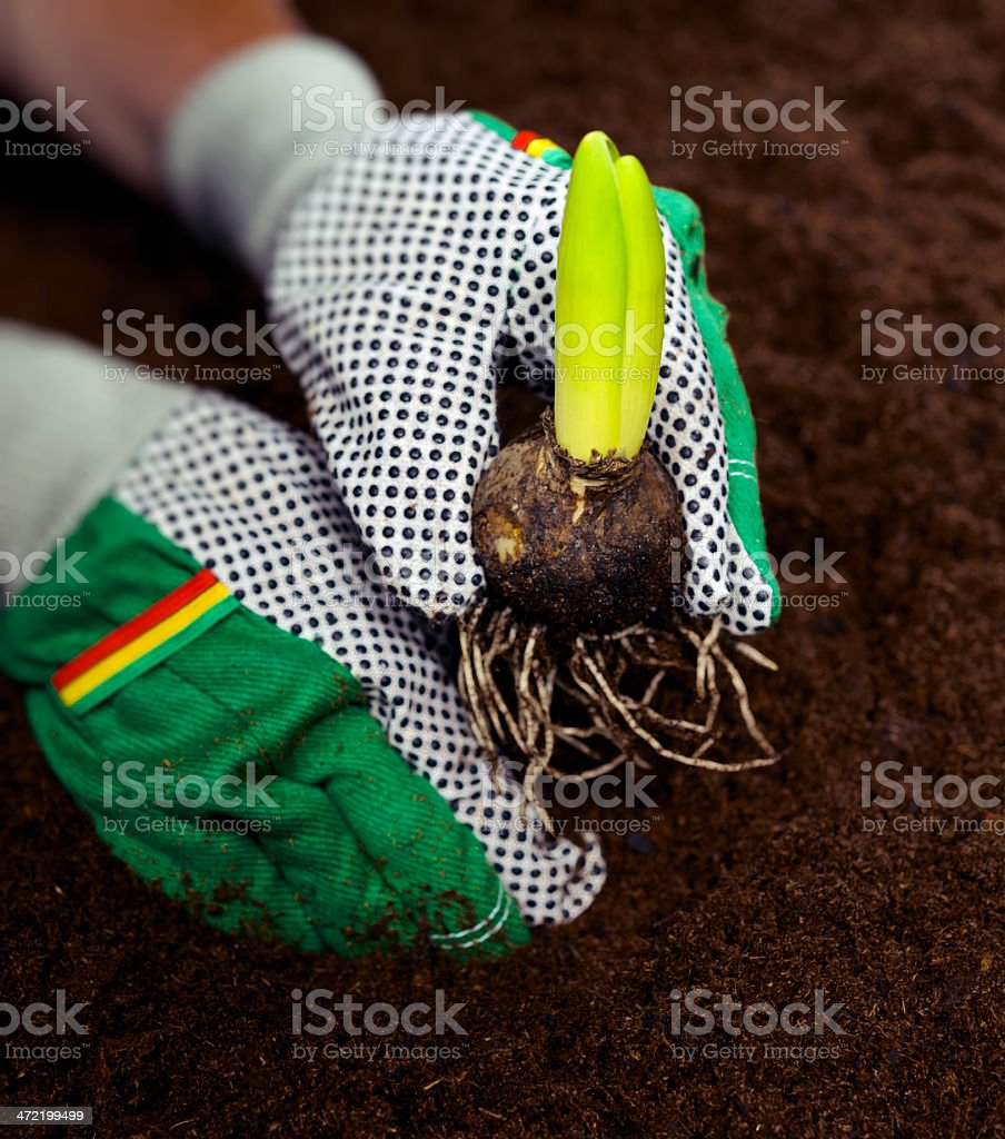 leisure gardening activity royalty-free stock photo