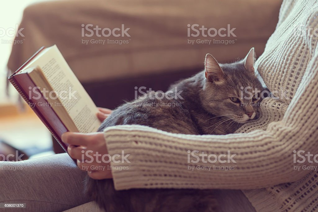 Leisure time with a cat stock photo