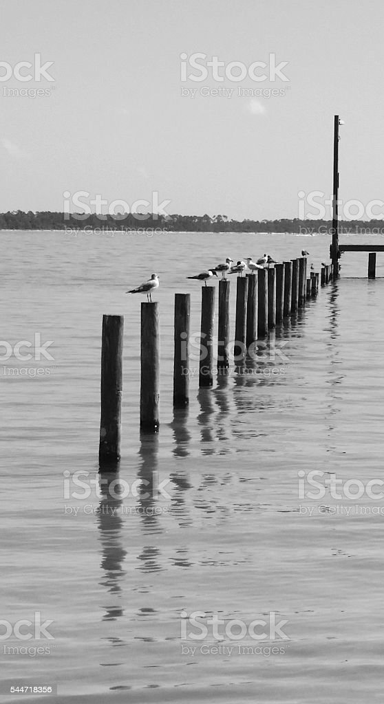 Leisurely Florida Day watching the seagulls perching stock photo