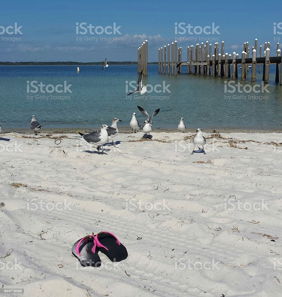 Leisurely Florida Vacation with Seagulls flying stock photo