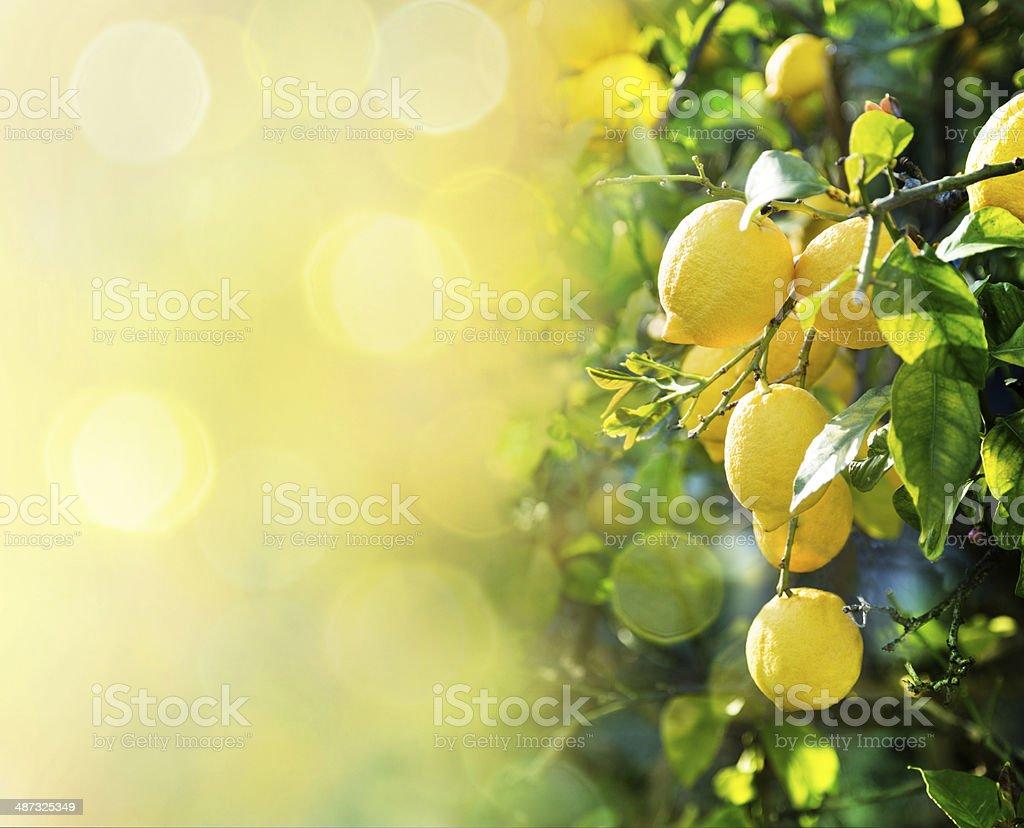 lemon background stock photo