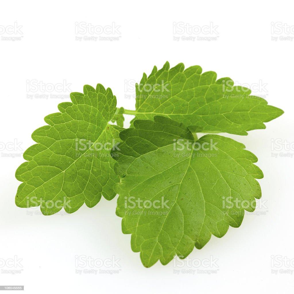lemon balm (mint) royalty-free stock photo