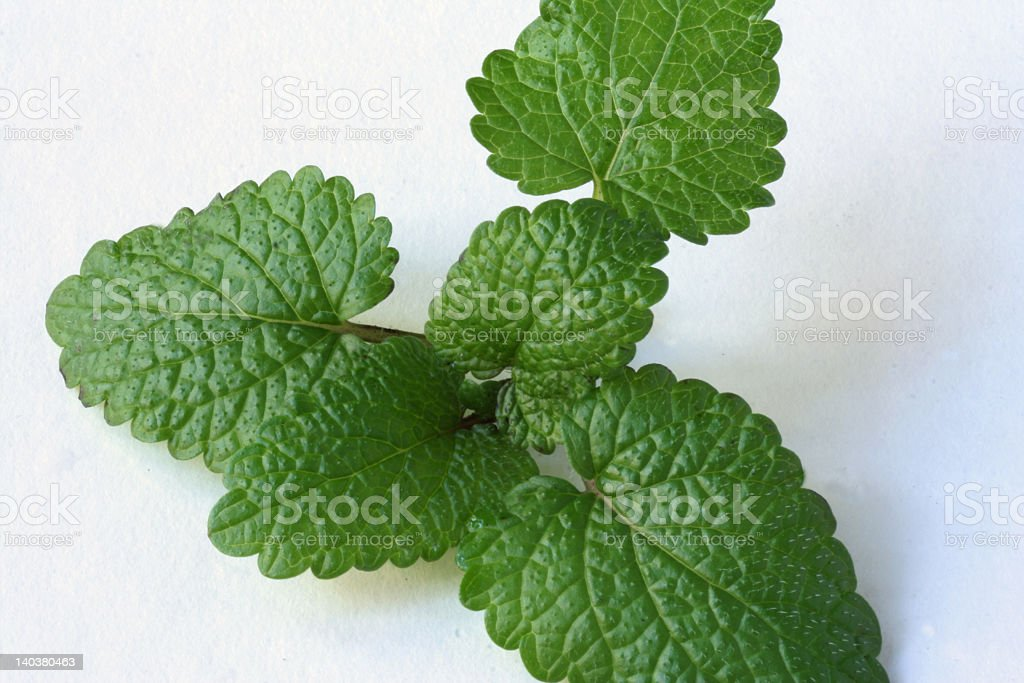 lemon balm royalty-free stock photo