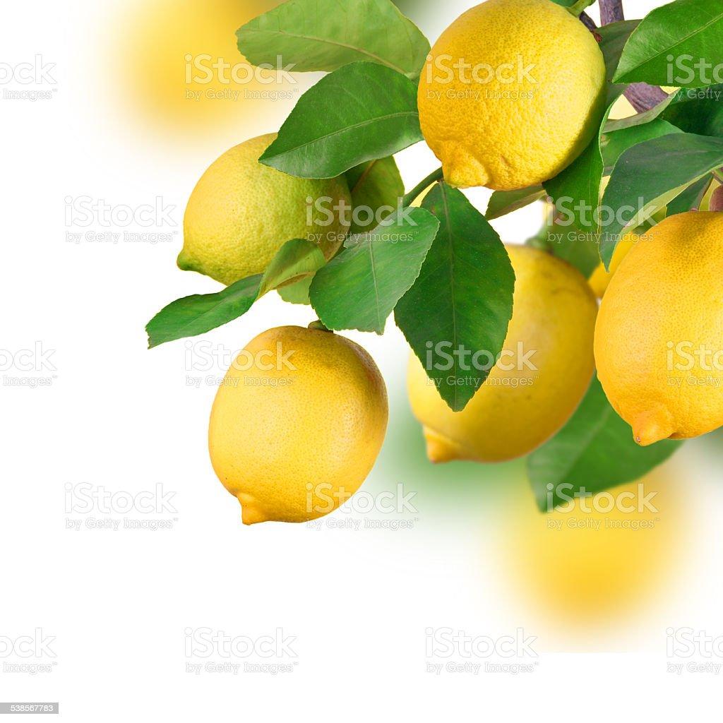 Lemon bunch, isolated stock photo