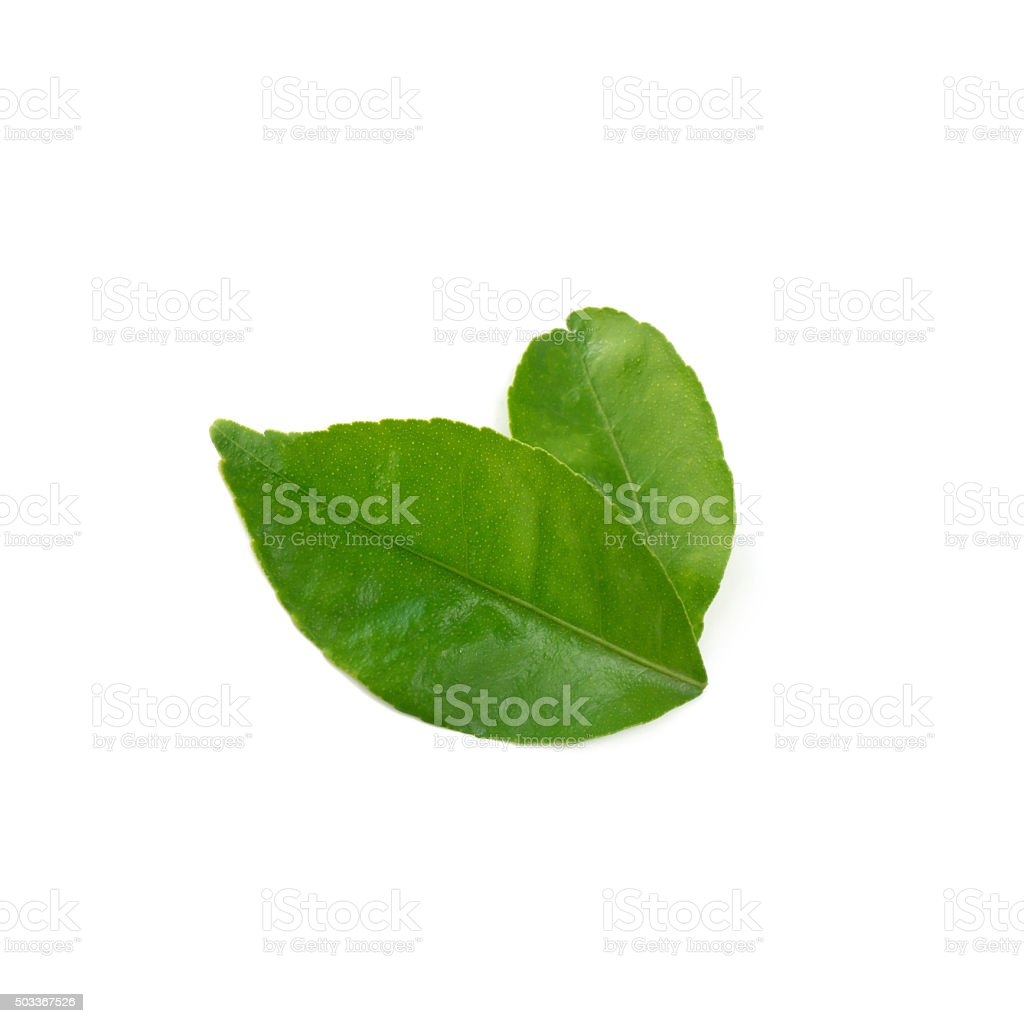 Lemon leaf isolate on white background (Lime's leaf) stock photo