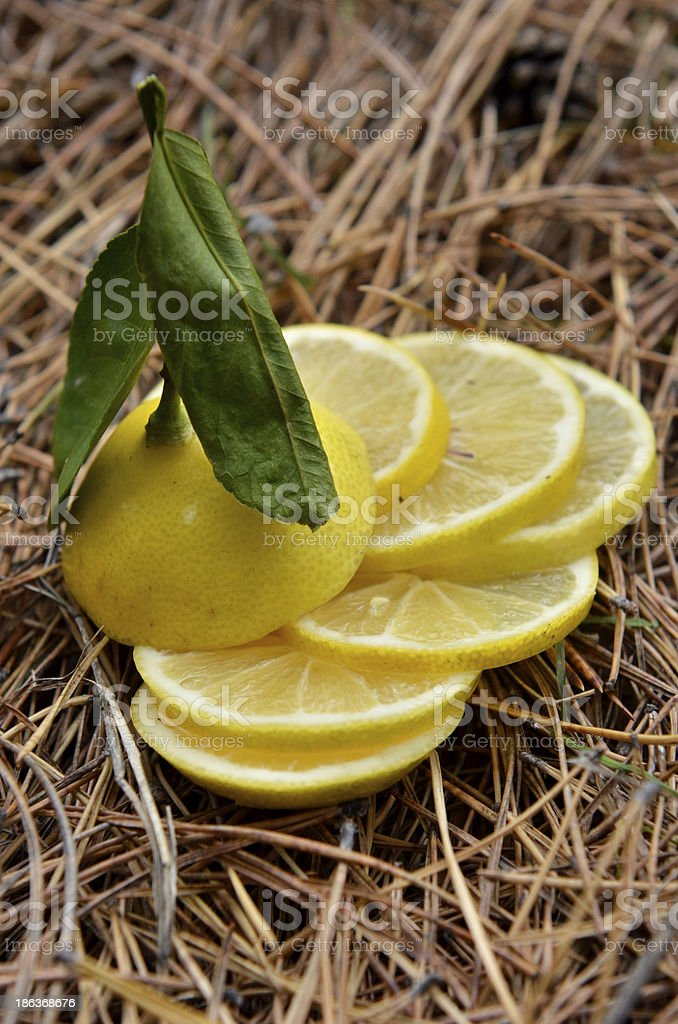lemon on natural background royalty-free stock photo