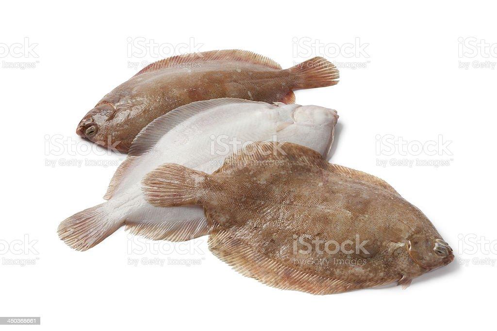 Lemon sole fishes royalty-free stock photo