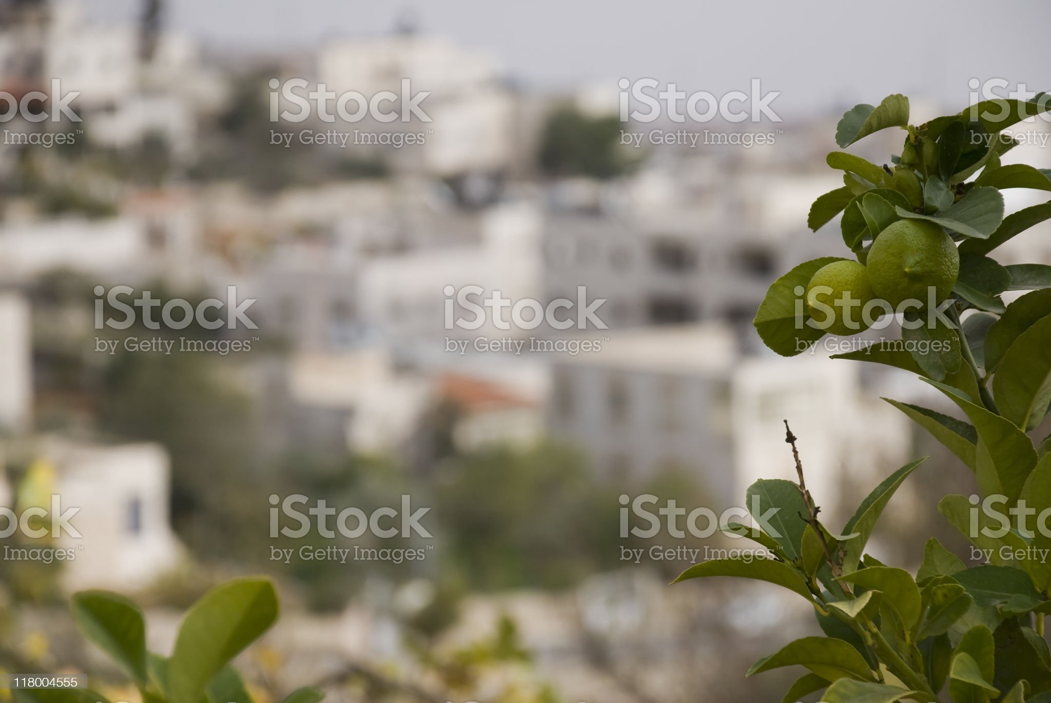 lemon tree and town in the West Bank royalty-free stock photo