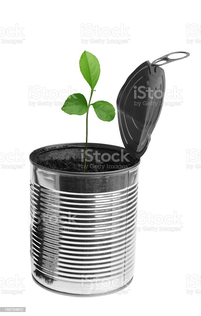 Lemon tree growing from opened tin royalty-free stock photo