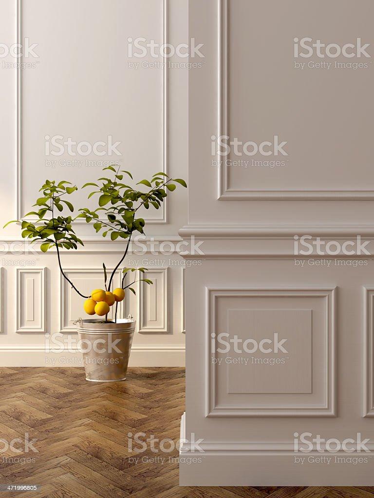Lemon tree in the interior stock photo