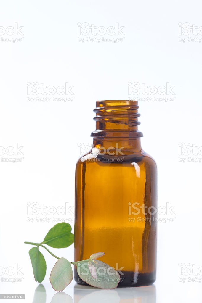 lemon vervain , verbena essential oil naturopathy stock photo