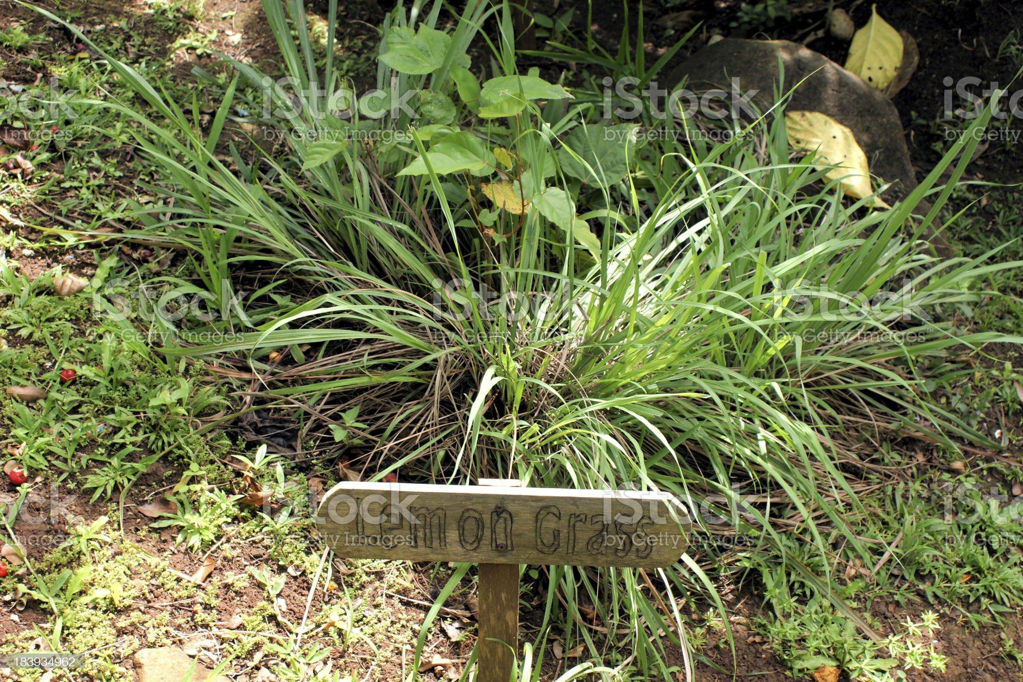 Lemongrass royalty-free stock photo