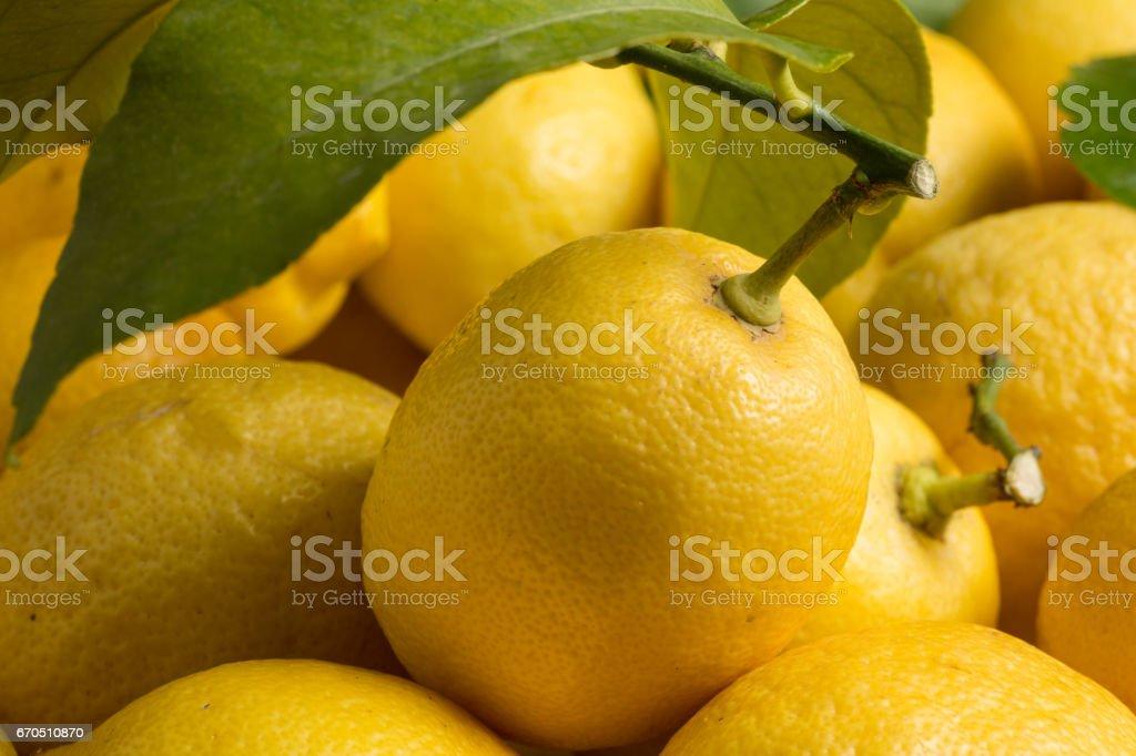 Lemons, central view stock photo