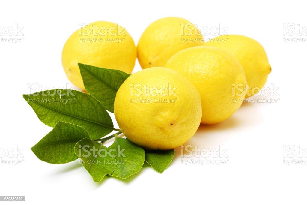 lemons on white background stock photo