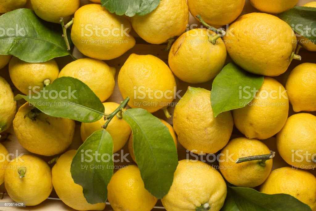 Lemons with leaves stock photo