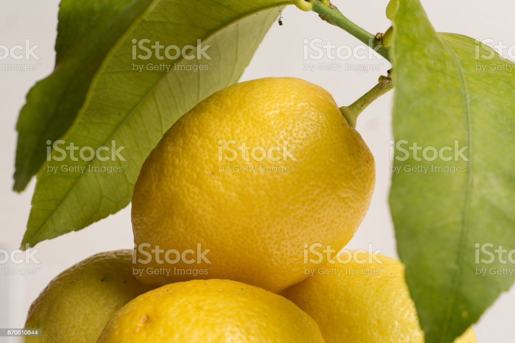 Lemons with stem and leaves stock photo
