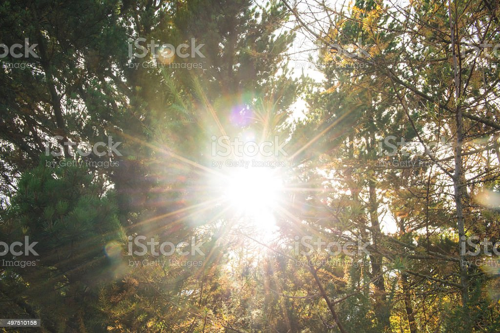 lens flare in the forest stock photo