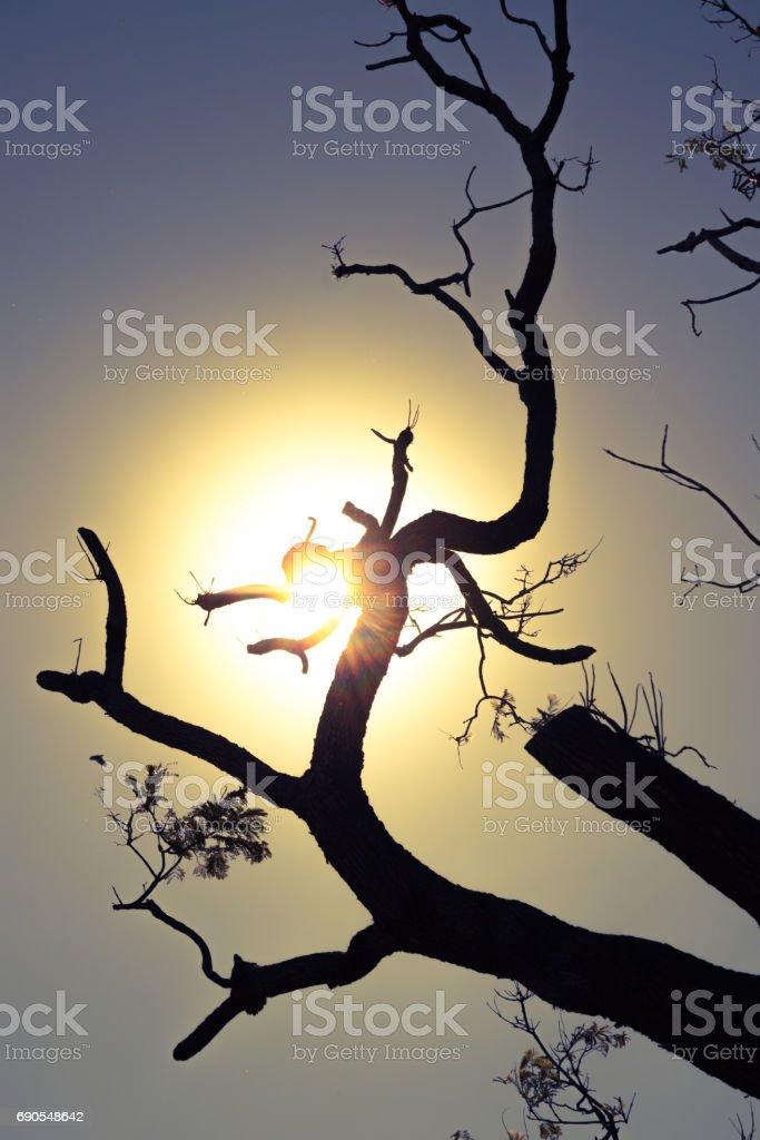 Lens flare with of tree in the background - silhouette. stock photo