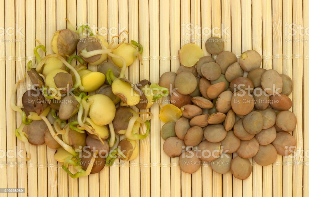 Lentils and lentils sprouted stock photo