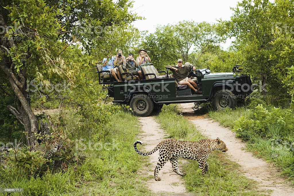 Leopard Crossing Road With Tourists In Background stock photo