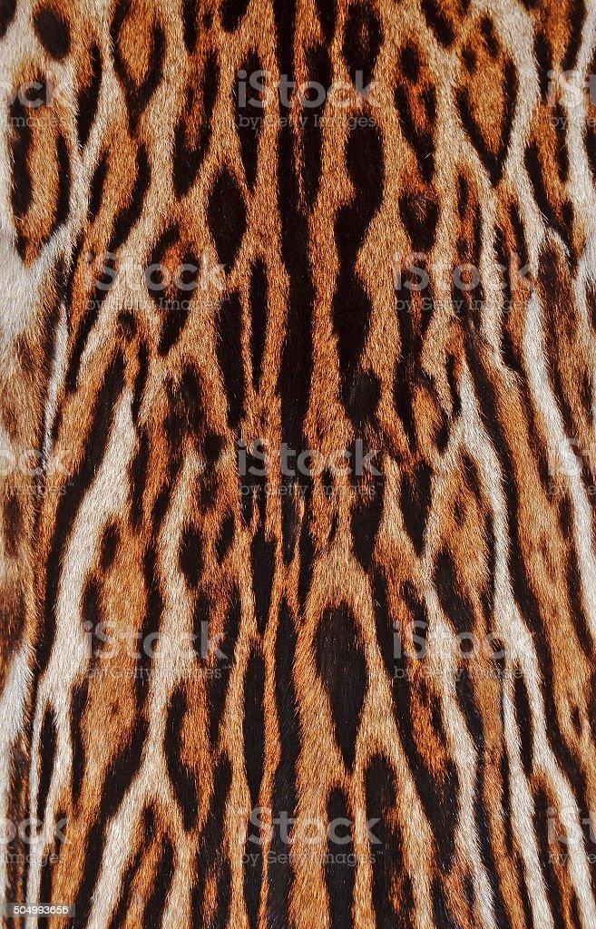 leopard fur stock photo